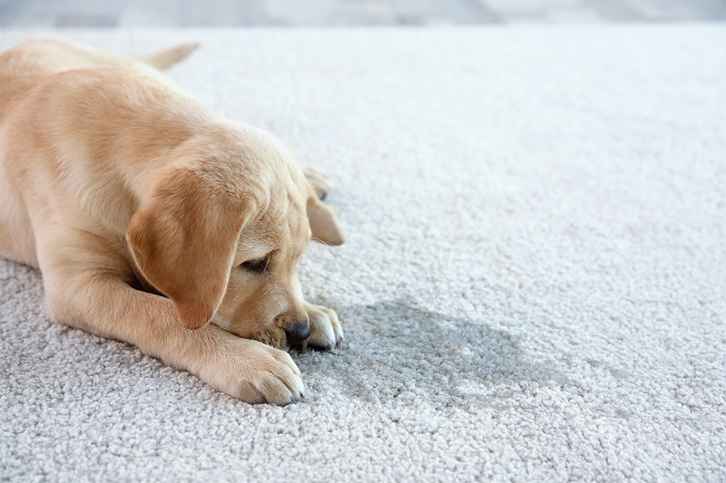 Types of Carpet and How To Clean Them